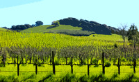 Carneros Vineyard (art)