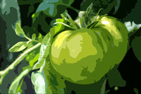 Keller's Green Tomato (art)