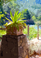 Calistoga Ranch Agave (art)